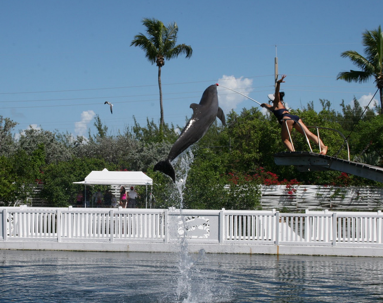 Florida Keys Dolphin Swim Includes