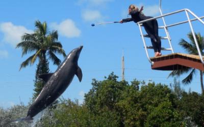 Florida Keys Show Schedule