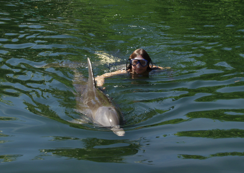 Florida Keys Snorkeling with the Dolphins in Florida Keys