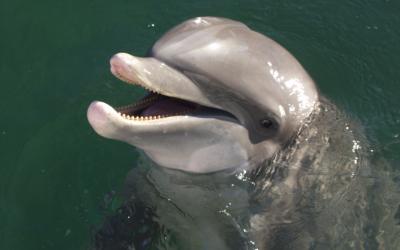 Places to Swim with Dolphins near Key West