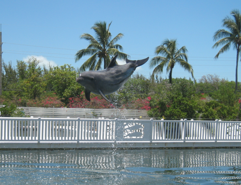 Can You Swim with Dolphins Near Marathon FL?